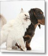 Blue-point Kitten And Dachshund Pup Metal Print