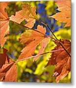 Blue Ridge Autumn Leaves 1.0 Metal Print