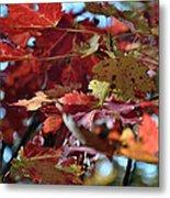 Blue Ridge Autumn Leaves 1.1 Metal Print
