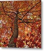Blue Ridge Autumn Leaves 1.3 Metal Print