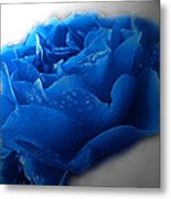 Blue Rose With Drops Metal Print