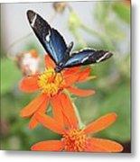 Blue Sara On Orange Sunflower Metal Print