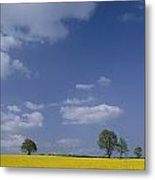 Blue Sky Covers A Yellow Field Metal Print