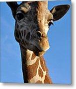 Blue Sky Giraffe Metal Print