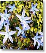 Blue Star Flowers Metal Print