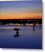Blue Sunset Mangroves Metal Print