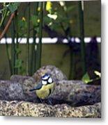 Blue Tit On Bird Bath Metal Print by Jane Rix
