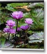 Blue Tropical Water Lilies Metal Print