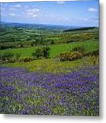 Bluebell Flowers On A Landscape, County Metal Print
