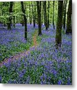 Bluebell Wood, Near Boyle, Co Metal Print