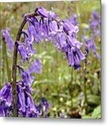Bluebells (hyacinthoides Non-scripta) Metal Print
