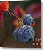 Blueberry Dewdrops Metal Print