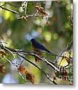 Bluebird At Rest Metal Print