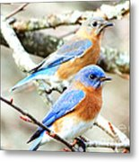Bluebird Couple Metal Print