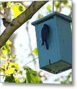Bluebird Hanging Around Metal Print