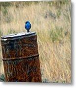 Bluebird On A Barrel Metal Print