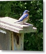 Bluebirds Make Me Happy Metal Print