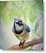 Bluejay In A Tree Metal Print