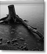 Bluffs Beach Stump Black And White  Metal Print