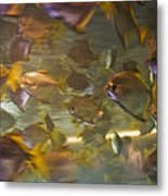 Blurred Image Of Fish Swimming In An Metal Print