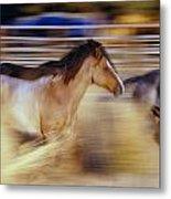 Blurred View Of Horses Running Through Metal Print