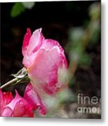 Blushing Pink Beauties Metal Print by Donna Parlow