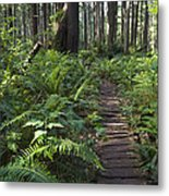 Boardwalk Winds Through The Forest Metal Print