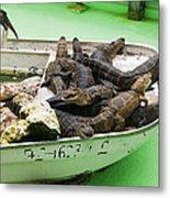 Boat Full Of Alligators  Metal Print