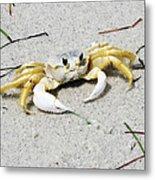Boca Grande Crab Metal Print