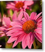 Bold And Beautiful Metal Print