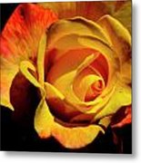 Bold Rose 2 Metal Print
