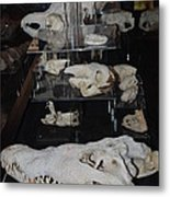 Bone Heads Metal Print