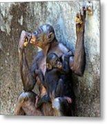 Bonobo 1 Metal Print