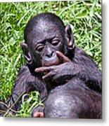 Bonobo 2 Metal Print