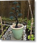 Bonsai Tree  Large Metal Print