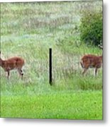 Bookend Twin Bucks Metal Print