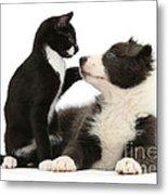 Border Collie Pup And Tuxedo Kitten Metal Print