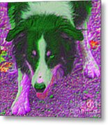 Border Collie Stare In Colors Metal Print by Smilin Eyes  Treasures
