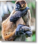 bored Spider Monkey Metal Print
