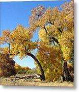 Bosque Fall Metal Print