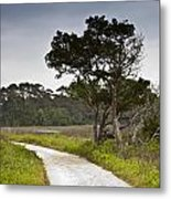 Botany Bay Pathway Tree Metal Print