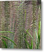 Bottle Brush Grass Metal Print