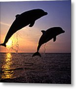 Bottlenose Dolphins Metal Print by Francois Gohier and Photo Researchers