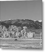 Boulder County Colorado Front Range Panorama With Horses Bw Metal Print