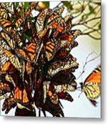 Bouquet Of Butterflies Metal Print