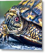 Box Turtle 2 Metal Print