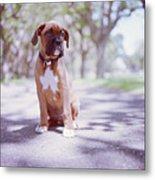 Boxer Puppy Metal Print