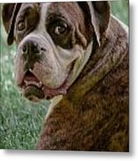 Boxer Smiles Metal Print by DigiArt Diaries by Vicky B Fuller