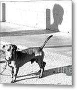Boy Meets Dog Metal Print by Joe Jake Pratt