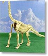 Brachiosaurus Dinosaur Skeleton Metal Print